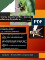Capacitación Rhagoletis 20-10-2020
