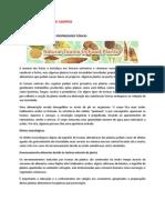 NEWSLETTER LICINIA DE CAMPOS 11 - toxicidade das plantas alimentares