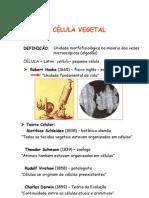 C_lula_Vegetal.Slide_1
