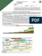 examen  final ecologia
