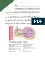 Metabolisme Hormon Tiorid