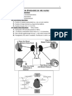 kidney physiology