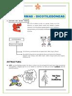 Monocotiledoneas-y-Dicotiledoneas-SENA