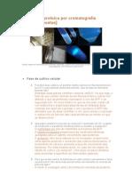 guia respuestas purificacion proteica