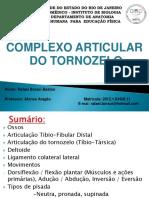 Complexo articular do tornozelo UERJ