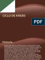 Ciclo de Krebs.pptrafael