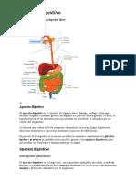 Resumen del Aparato Digestivo.