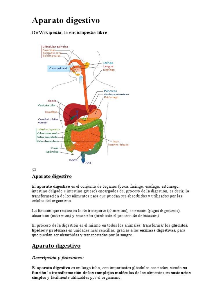 Resumen Del Aparato Digestivo