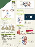 Sistema Cardiovascular Y Tejido Sanguíneo