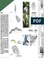 Copia de Ficha de Análisis de Grillas