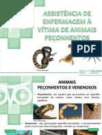 vitimas de animais peçonhentos