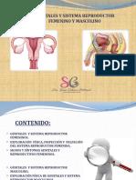 semiologia genitales y sistema reproductor masculino y femenino