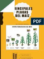 03 - Principales Plagas Del Maíz