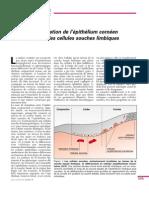 restauration de l'épithélium cornéen à partir de CSL