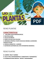 reino plantae (1)