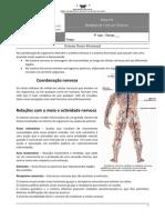 Ficha nº4 - Sistema Neuro-Hormonal (Informação)
