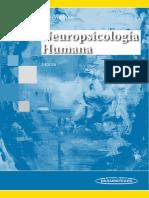 Neuropsicologia Humana
