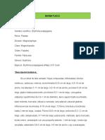 INFORMACION DE 4 ESPECIES NATIVAS DE OCAÑA
