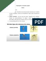 Organografia e Taxonomia Vegetal - Resumo