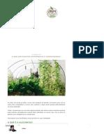 O Que São Plantas Antagônicas e Companheiras_ - Jardim Do Mundo
