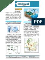 [Teoria] Ciclos Biogeoquímicos (1)