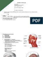 Sinteza-Sistemul-Muscular