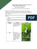 Evidencia Registro Fotográfico Indicar Las Deficiencias Nutricionales Encontradas en Las Plantas Atendiendo El Diagnóstico Visual