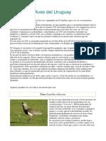 aves_del_uruguay_1