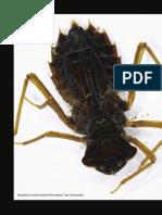 10 Los macroinvertebrados acuáticos Andakí_ColAmaz12