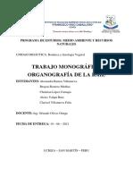 Monografico -Organografia de La Raiz