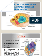 nivel_celular