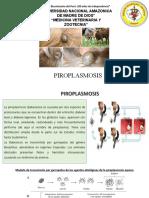 PIROPLASMOSIS (1)