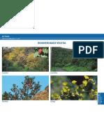 Biodiversidade vegetal