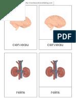 Organ Es