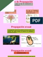 Tipos de Propagación