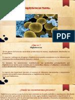 taphylococcus aureus