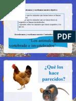 Clase Vertebrados e Invertebrados 01.06.21