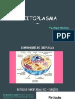 o Citoplasma