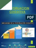 Fosforilacion oxidativa 3