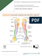 Anatomía_ inervación cutánea del miembro superior