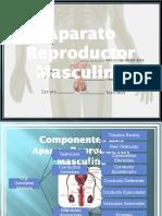 18. Aparato Reproductor Masculino modificada