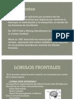 LOBULOS FRONTALES[1]