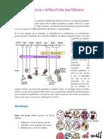 Morfología y estructura bacteriana(resumen)- Laura E. Díaz Chávez