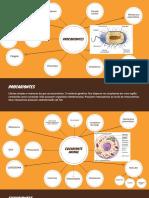 Cópia de Orange and Brown Bubble Map Chart
