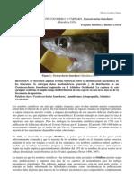 REPORTE DE TIBURÓN COCODRILO  O TÁRTARO