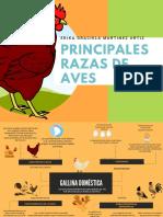 Principales razas de aves