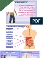 Presentación sistema digestivo 5°