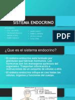 Sistema Endocrino f
