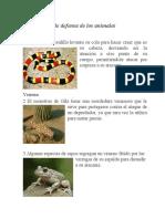 tarea mecanismos de defensa animales