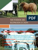 TEMA 4 METODOS DE REPRODUCCION